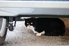 Today's Cat@2012-12-08 (masatsu) Tags: cat casio exilim cc100 catspotting thebiggestgroupwithonlycats exzr1000
