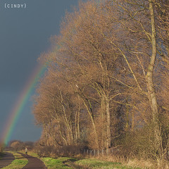 316/366 ({cindy}) Tags: autumn trees canon square rainbow path bare 50mm14 365 365days canon5dmarkii