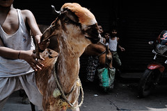Chawri Bazar (Giannis Papanikos1) Tags: horse india children kid asia child delhi goat august monsoon bazar giannis chawri  papanikos