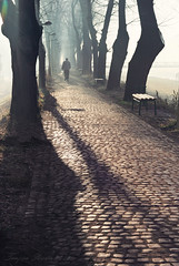 Long Shadow Path (Tanjica Perovic) Tags: path trees alley cobblestones personinthedistance perspective light sunlight backlight morning misty foggy atmospheric bench lamps pirotsrbija photography vertical rearview cold winter nosnow fotografijepirota floodbarrier barrieragainstflooding svetozarmisirlic quay floodingprotection throughherlens