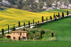 Crete Senesi during spring time (April 2007) (Michele Berti) Tags: road italy house film field farmhouse analog landscape landscapes countryside italia farm wheat country slide slidefilm campagna velvia cypress siena analogue toscana valdorcia paesaggi cypresses paesaggio countryroad analogica cretesenesi rapes wheatfield fujivelvia50 fujivelvia colza pellicola cipressi abitazione analoguephotography campodigrano tuscancountryside fotografiaanalogica campagnatoscana tyscany casavacanze analogicait cypressescountryroad rowsofcypresses stradatoscanaconcipressi coloridellavaldorcia fotografiedellavaldorcia fotografiedellecretesenesi