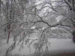 Snowstorm in Madison, Wisconsin (ali eminov) Tags: winter snow wisconsin seasons snowstorm madison whitewinter