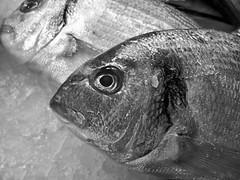 #.05° martedì (UBU ♛) Tags: portrait blancoynegro blackwhite noiretblanc ritratto biancoenero kodakeasysharem1033 ©ubu unamusicaintesta luciombreepiccolicristalli