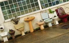 they come in all shapes, colours  & sizes (helenoftheways) Tags: uk london freeassociation lewisham urinal bidet toilets lavatories davenportroad sanitationitemsasplantpots stonemansonsplumbersmerchants