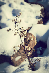 Frozen Life (KineticBear) Tags: christmas morning winter snow ice sunrise michigan menominee jacobmiller kineticbear