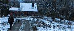 In the Gloaming (Ad Cat Media) Tags: kentucky farms bordercollie gloaming andersoncounty adcatmedia glensboro adcatfinephotography