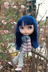 Miss Blue,again :)