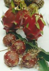 Frutas de pitaya y pitahaya (pitayapitahaya) Tags: pitahaya pitaya stenocereus hylocereus