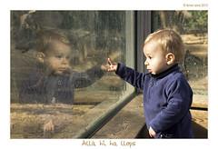 All hi ha llops (Ferranet) Tags: barcelona portrait reflection canon zoo reflex kid wolf retrato reflejo zoolgico lobo catalunya nio nen retrat maral llop humanfactor 60d zoolgic factorhumano tamron18270 factorhum