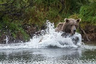 Alaska Fly-out Fishing Lodge 64