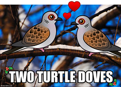 Two Birdorable Turtle Doves (birdorable) Tags: christmas holiday cute bird song dove 12daysofchristmas birdorable twoturtledoves
