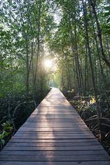 Wooden Path (g1aciem) Tags: wood path mangrove forest