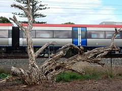 Train and Wood (mikecogh) Tags: hove treetrunk dead train stump