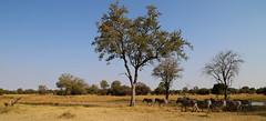 Nature (www.mattprior.co.uk) Tags: adventure adventurer journey explore experience expedition safari africa southafrica botswana zimbabwe zambia overland nature animals lion crocodile zebra buffalo camp sleep elephant giraffe leopard sunrise sunset