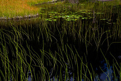 Mountain Lake (Harry2010) Tags: mountseymour lake mountain reeds green reflection nature bc waterlilies wow