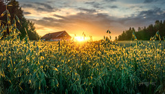 Askim, Norway 0266 - Sunset over House and Cereals Field (IP Maesstro) Tags: cereals field sunset sunrise house architecture nature landscape sky clouds sun summer norway hdr askim ipmaesstro