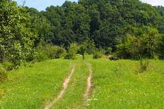 út a réten át / trail through the meadow (debreczeniemoke) Tags: nyár summer rét meadow erdő forest út road ösvény trail olympusem5 frakk