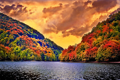Autumn has arrived (bcalin26) Tags: forest autumn tree water lake landscape leaves painting atmosphere windy