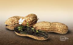 Atelier2 - Amendoim (Atelier 2) Tags: atelier2 amendoim planta flor pastel carlos