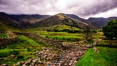 Greater Langdale in the Lake District (Barry.Turner.Photography) Tags: cumbria lake district uk england sony a65 sigma1020mm landscape sigma outdoor serene grass grassland field mountain barry turner wide angle greaterlangdale mountains mountainside valley green beck river 18250mm