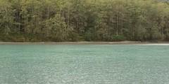 (tsibley) Tags: river rain water skagitriver skagitvalley trees