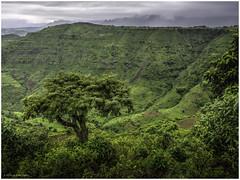 Mountain View (Luc V. de Zeeuw) Tags: cloudy ethiopia ethiopian landscape mountain trees northgondar amhara