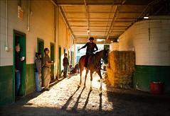 Making a Point from the Saddle (45431) (Kurt Kramer) Tags: arlingtonpark horse man naturallight silhouette barn