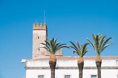 Three Palms ( Angeles Antolin ) Tags: angeles antolin badajoz extremadura hoyos spain palms blue sky