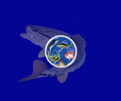 AhabIt_Globe Mockup 2 with blue bk big grouper opaque by Vinnie (AdFor.US) Tags: cousin vinnie