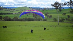 Anna landing flare (overflow50) Tags: paragliding paraglider canberra spring springhill sky clouds