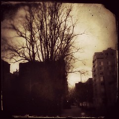 (Manhattan Girl) Tags: nyc trees sepia manhattan textured iphone texturesquared iphoneography hipstamatic