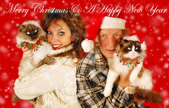 Merry Christmas & A Happy New Year From All Of Us ( With Youtube Video) (Jaynie25) Tags: christmas new friends music cats souls animals stone cat feline greg duo year country n domestic singers guinevere ragdoll birman jaynie breeds shogi jaynie25