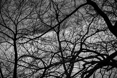 Another Winter Dance (robertdanielullmann) Tags: trees branches wintertrees wintersky skyandclouds clouds blackandwhite robertdanielullmann