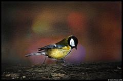*** (dmitry_ryzhkov) Tags: life light portrait motion colour film nature birds animals fauna analog walking photography photo shot minolta photos russia shots moscow picture documentary pic scene moment dmitry parusmajor momentsoflife ryzhkov dmitryryzhkov dmitryryzhkovcom