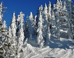 Northwest Lift on Mt. Bachelor (Powskichic of Bend) Tags: new blue trees sky sun white mountain snow cold feet ice rock oregon frozen frost mt skiing bend wind year freezing first resort mount alpine bachelor level western bluebird peaks elevation range cascade 9000 montanas temperatures volcanos lifts mountbachelor 2013 midteens powskichicofbend brendareidirwin