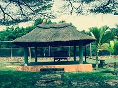 IMG_2610 (r.Mb) Tags: tree green grass canon scene hut ghana accra