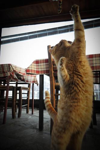 Cat acrobatics