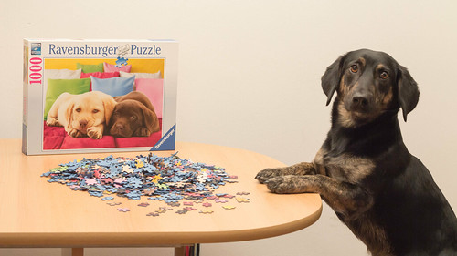 [Explored] Daily Dog 2013 008: 1000 Pieces?