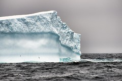 Antarctica 2013: Journey to the Crystal Desert (Christopher.Michel) Tags: ice penguins gentoo antarctica pole stunning iceberg polar nsf chinstrap adelie christophermichel corinthianii photoschristophermichel