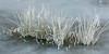 Iced up vegetation