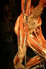 IMG_9644 (Patty Mooney) Tags: california sandiego von human anatomy macabre gunther bodyworlds plastination gunthervonhagens humananatomy hagens sandiegonaturalhistorymuseum bodyworldsexhibit germandoctor anatomicalexhibit