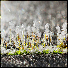 teeny tiny hoar (1crzqbn) Tags: sunlight color macro texture ice nature wet square moss melting frost shadows bokeh ngc 7d ie legacy shining refractions tistheseason coth hbw artdigital trolled memoriesbook bokehwednesday awardtree magicunicornverybest magicunicornmasterpiece crazygeniuses exoticimage 1crzqbn netartii teenytinyhoar rainiceandsnow