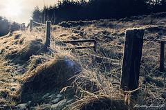 Frosty Morning (photobypawelp) Tags: travel ireland winter cold nature sunshine fence landscape photography nikon frost naturallight gras poles wicklowmountains cowicklow nikond300 photobypawelp