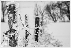 fence in winter (bernd obervossbeck) Tags: fence zaun stacheldrahtzaun winter schnee snow sauerland hochsauerland bracht brachterhhe schwarzweis blackandwhite sw natur nature blackwhite mygearandme
