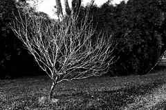(JessieMartinin) Tags: park trees bw white nature grass garden back nikon branches ground pb inspire d3100 nikond3100