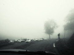 Inner collapse (Sator Arepo) Tags: road trees mountain france animals bicycle fog port lost lumix cycling alone driving tour sheep 28mm panasonic tired collapse resting curve 14mm gf1