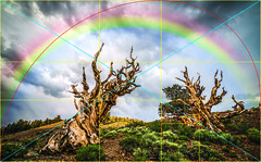 Golden Ratio Ancient Bristlecone Pines Rainbow! Sony A7RII Elliot McGucken Fine Art Landscape Photography! (45SURF Hero's Odyssey Mythology Landscapes & Godde) Tags: art landscape photography golden rainbow ancient sony fine pines elliot bristlecone ratio mcgucken a7rii