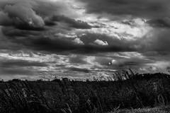 clouds (Nikita Gorbachev) Tags: clouds sky summer world natural life bleak beautiful blackandwhite wonderful shot tamron joy