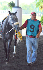 2016-08-13 (7) r6 #9 Synergist (JLeeFleenor) Tags: photos photography md maryland marylandhorseracing marylandracing laurelpark hot horses thoroughbreds equine equestrian cheval cavalo cavallo cavall caballo pferd paard perd hevonen hest hestur cal kon konj beygir capall ceffyl cuddy yarraman faras alogo soos kuda uma pfeerd koin    hst     ko  paddock grey gray