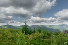 W stronę szlaku grzbietowego z Baraniej na Skrzyczne (czargor) Tags: beskidy beskidslaski mountains mountainside baraniagora sightseeing